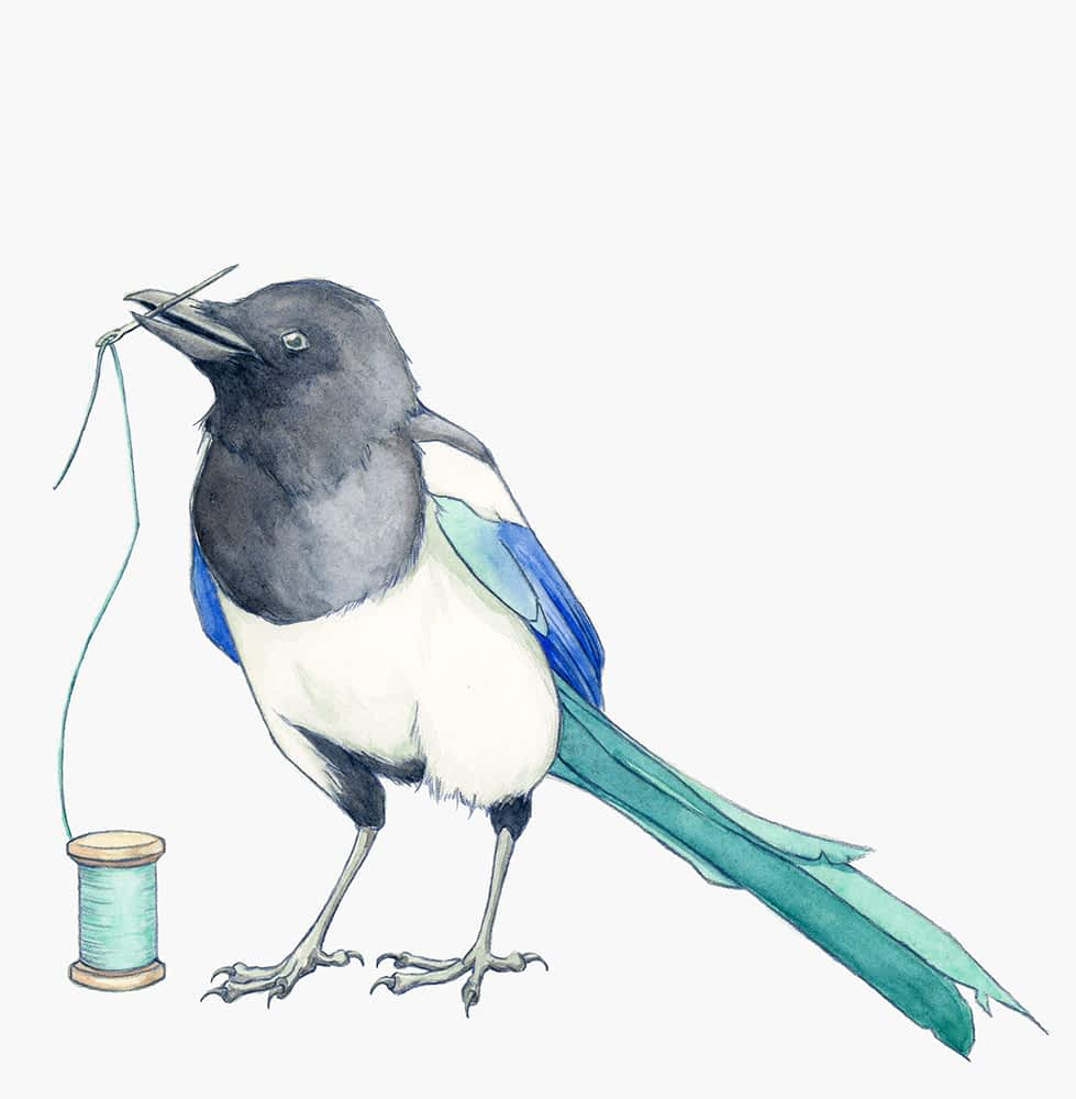 Magpie holding a threaded needle