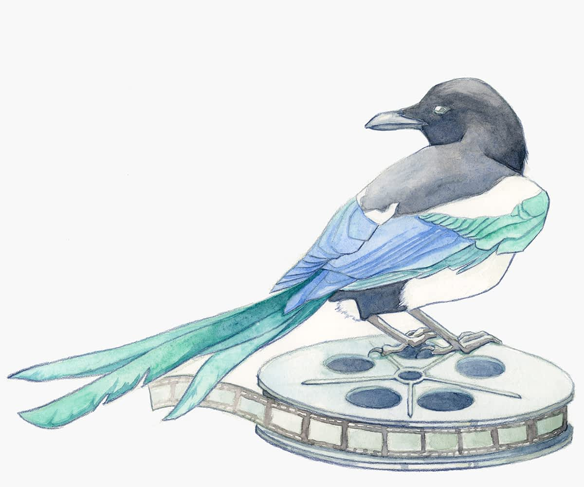 Magpie holding standing on a film reel